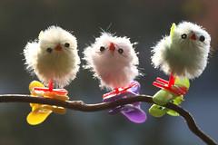 happy chicks (HansHolt) Tags: chicken chick kuiken polluelo poussin küken mini peg easter easterbranch paastak corkscrew hazel kronkelhazelaar backlight tegenlicht bokeh macro canon 6d canoneos6d canonef100mmf28macrousm macromondays pastel hmm