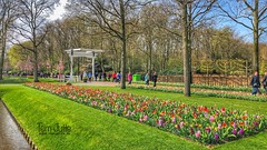 Keukenhof Gardens, Spring Flower Park, Netherlands - 2391 (HereIsTom) Tags: webshots travel europe netherlands holland dutch view nederland views you nature sun tourists cycle vakantie fietsvakantie cycling holiday bike bicycle fietsen plus apple ios camera iphone 8 plants green roses daffodils 9 spring lilies keukenhof grass bridge park trees lisse flowers hyacinths gardens tulips tulpen carnations april orchids 2019 bloom blossem amsterdam colors bloemen field garden bulb flower mother's day million time yellow red jardin
