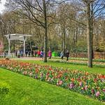 Keukenhof Gardens, Spring Flower Park, Netherlands - 2391 thumbnail