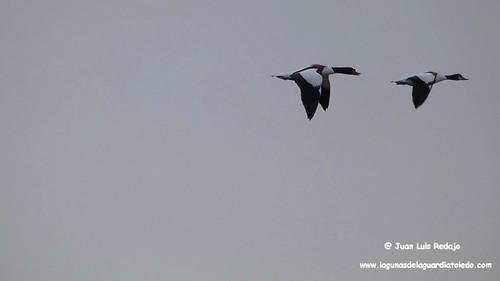 tarros-blancos-vuelo-1 276