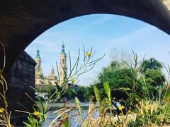 Espiritualidad difuminada entre la vegetación silvestre... Paseos por la ribera del Ebro. .  #goedenacht #buenosdias #bonjour #river #puentedepiedra #soul #letters #soledad #words  #fotografia#ebro #photography  #artphoto #photonature #flowers  #photo (egc2607) Tags: river gutentag words soledad photonature igerszgz ebro letters puentedepiedra buongiorno sun photooftheday goedemorgen bomdía lanscape artphoto bonjour flowersphoto soul photography zaragozapaseando instazaragoza goedenacht elpilar zaragoza fotografia instazgz buenosdias flowers