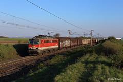 ÖBB 1142 664 | DG 60026 | Gramatneusiedl (A) (m-r.hart) Tags: 1142 öbb österreich austria austrian railway güterzug freight train eisenbahn bundesbahn