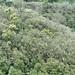 0937_Akaka_Falls_jungleTexture_aDSC_0937