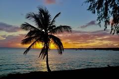 Barbados Sunset (mikeginn12000) Tags: barbados sunset ocean palmtree canon night evening colorful