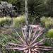 PHX Desert Botanical Garden IMG_2177