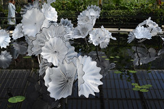 Chihuly Reflections on Nature - 65 - Ethereal White Persian Pond (Mac Spud) Tags: london nikon z6 kew gardens chihuly reflectionsonnature art sculpture glass park plants