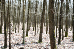 Waldspaziergang II (Frau Koriander) Tags: wald woods forest waldspaziergang mörfeldenwalldorf rüsselsheim mönchbruch trees tree baum bäume stämme licht light nikond750 85mm nikkor85mmf18d