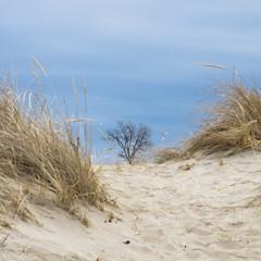 Tree and Gulls (Bud in Wells, Maine) Tags: drakesisland dunegrass dunes gulls tree dof sand wells maine