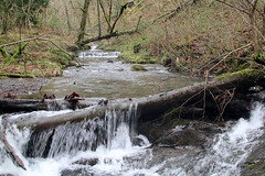IMG_2009 (Simon M Hendry) Tags: unitedkingdom wales tanycoed forest river waterfall machynlleth corris winter