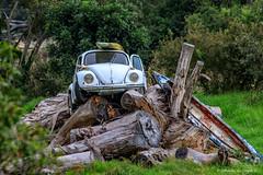 Beetle on the logs (Johann (Still Me!)) Tags: beetle logs abandoned vehicle rust rusty surfboard canoe vwbeetle johanndejager ef70300mmf456isusm canoneos5dmarkiv unlimitedphotos makemesmile