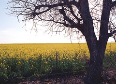 roll37005-2 (k5jvc) Tags: mamiya 645 pro ektar 100 fields landscape oklahoma okarche