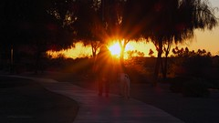 Sunset Trail (VGPhotoz) Tags: walking dog street sunset road boulevard nature outdoors arizona usa southwest peace sunlight beam flare bright love april 2019 joy happy fitness routine path trees ilovearizona explorearizona inlight followthelight flickr yahoo photo image poza foto photography picture art artisticphotography brilliant blown rays dream outside together americanwest poeticart artistic soare copaci strada olympus em1markii m40150mm f28 ƒ140 570 mm 1100 320 city parks sunnydelight sunny evening dusk men bestfriends aphotoadaykeepsthecrazyaway