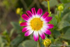Les fleurs du jardin (np7laphotopassion) Tags: aisne crepy hautsdefrance