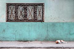 On a leash (FX-1988) Tags: facade architecture leash dog animal animals street green old havana window urban waiting