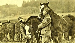 PVT Hanna with Kaiser and Sgt. Peterson with Kronprintz as they part with their Artillery Horses, Hundsdorff, Germany 1-20-19 NARA111-SC-51222 (over 16,000,000 views Thanks) Tags: horses mules artillery ww1 worldwari germany 1919 usarmyphotos usarmy