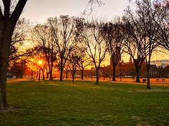 morning glow (ekelly80) Tags: dc washingtondc spring march2019 morning glow light sun sunrise commute nationalmall trees