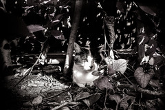 neko-neko2399 (kuro-gin) Tags: cat cats animal japan snap street straycat 猫 monochrome