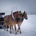 Leaving Wintertime behind ...