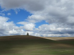 Clouds and shadows on the Palouse (bencbright) Tags: landscape clouds palouse idaho sx60 canonsx60 latah tree wheat hills
