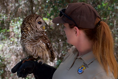 Barred Owl (stephaniepluscht) Tags: alabama 2019 bird banding band birmingham audubon barred owl bon secour national wildlife refuge