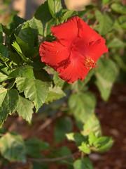 2019-3-26 Flower in morning light