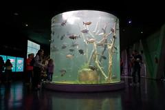 Acuario del Río Paraná (Coluso) Tags: argentina rosario acuario sony a6500 aquarium