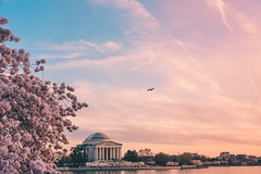 Cotton Candy Skies (mattb105) Tags: flowers spring sky landscape plane washington dc water nature cherry blossoms beauty pink tree travel