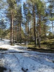 Forest (andreybarutkin) Tags: лес сосны свежийвоздух природа красотароссии лёгкиепланеты земля nature russia beautyofnature beautyofrussia ленинградскаяобласть