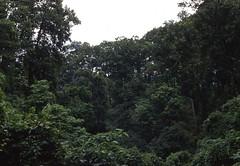 Darjeeling region (Paolo Levi) Tags: toytrain darjeeling westbengal green india canon ftb fd 50mm ilfochrome