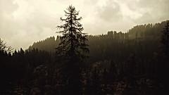 WP_20160930_044 (francesca407) Tags: landscape paesaggio montagna mountain alps alpi abete fir nuvoloso cloudy