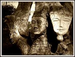 Trois visages sculptés dans un olivier (bleumarie) Tags: 13avril2019 avril2019 jardindesplantessaintcyprien jardindesplantes jardinpublic mariebousquet printemps2019 suddelafrance arbre avril bleumarie catalogne feuillage feuille fleur jardin languedocroussillon méridional nature occitanie parc plante printemps pyrénéesorientales roussillon sérénité saintcyprien sud végétal végétation verdure olivier vieilarbre vieilolivier sculpture sculpturesurbois bois visage trois tronc troncdarbre art artiste sculpteursurbois monochrome sépia visagesculpté