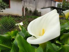 Kala (eitb.eus) Tags: eitbcom 1548 g1 tiemponaturaleza tiempon2019 flora bizkaia zaldibar nereaaagirre
