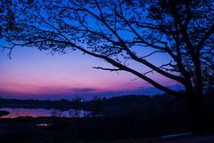 Blue Hour (Bhuvan N) Tags: nature naturephotography blue bluehour evening people trees natur travel india karnataka mysore mysuru aftersunset sky sunset green tree light lake kukkarahallilake leaves purple colours colors longexposure outside outdoors ciel cielo dusk