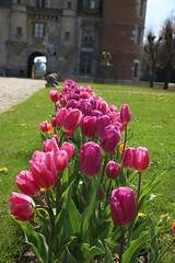 Purple alley ... (OGNB) Tags: canon6dmarkii landscape paysage château purple pourpre alley allée flowers fleurs tulipes