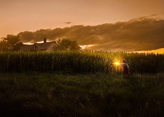 The Search ({jessica drossin}) Tags: jessicadrossin woman face corn light twilight clouds farm rural wwwjessicadrossincom