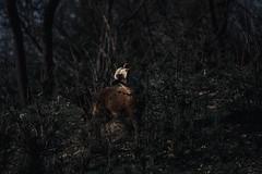 The Lamb (sdrusna79) Tags: lamb agnello animal