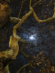 Secret thoughts (Robyn Hooz) Tags: eremitani padova alberi luna moon cielo notte night branches rami desire thought