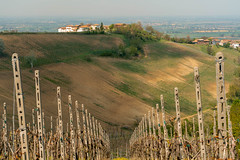 Vineyards of Oltrepo Pavese in April (clodio61) Tags: april europe italy lombardy oltrepopavese pavia agriculture color country day field green hill land landscape nature outdoor photography plant rural scenic spring springtime sunny village vine vineyard