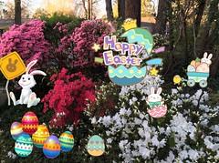 Happy Easter 🐣🐰🐇 Bunnies & Chicks🐰🌺🐥 (Jeanne1931) Tags: cute flowers azaleas eastereggs chicks easterbunny easter