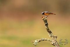 20190415-D4S_0017 (Bartek Olszewski) Tags: birds ptaki bird kukulka wood wildlife wild woods wings nature nikon natura nikond4s
