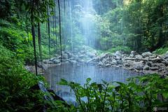 Crystal Shower Falls (Dreamtime Nature Photography) Tags: waterfalls falls water jungle rainforest landscape canon dreamtimenaturephotography dorrigonationalpark nsw newsouthwales australia crystalshowerfalls
