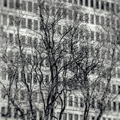 You Can Put on Your Bathing Suit (Thomas Hawk) Tags: america dallas texas unitedstates unitedstatesofamerica architecture bw trees