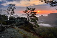 Misty Morning, Gleitmannshorn, part IV (Uwe Kögler) Tags: saxony sachsen sächsischeschweiz sunrise sonnenaufgang morning morgen misty nebel nebelstimmung germany gleitmannshorn hintere sächsische schweiz baum kiefer pine elbsandsteingebirge elbe