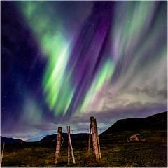 S.T.E.V.E. (niggyl (getting there)) Tags: steve suddenthermalemissionfromvelocityenhancement aurorasaurus nikcollection colorefexpro4 longexposure theethereallongexposure breathtakinglandscapes landscape auroraborealis aurora borealis norðurljós northernlights iceland ísland inspiredbyiceland icelandiclandscape fujinon fujinonxf14mmf28r xf14mmf28r xf1428 fujinonxf1428r fujifilm fujifilmxt2 fujixt2 xt2 snaefellsnespeninsular snæfellsnes snæfellsnesvegur route54 grundarfjörður cloudsstormssunsetssunrises therebeastormabrewin thesolarsystem astrophotography astrofoto nightphotography