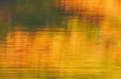 Yellow from last year (modest photo maker) Tags: wasser spiegelung herbst gelb abstrakt water reflection autumn yellow abstract