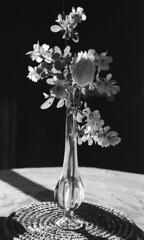 Un vase (michel.lample) Tags: michellample rollei retro80s fleurs vase contax rts pyrocat