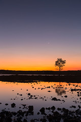 Koh Mak Island - silhouette of a tree with reflection on the beach at low tide during sunset. (baddoguy) Tags: blue clear sky color image colored background copy space crescent dusk famous place growth horizon over land water island landscape scenery low tide moon no people nonurban scene orange outdoors outline photography reflecting pool reflection lake right handed rural scenics nature sea seascape silhouette single object tree small solitude sparse standing sunset thailand tranquil trat province travel destinations twilight unusual angle vertical surface