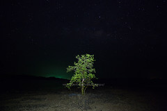 Koh Mak Island - The single mangrove tree with dark sky background. (baddoguy) Tags: beach black color bright clear sky image copy space dark famous place horizontal igniting island landscape scenery loneliness mangrove tree night no people outdoors photography sea seascape single object solitude strength tee thailand trat province travel destinations unusual angle