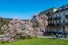 Big Magnolia - Große Magnolie - 3171 (Peter Goll thx for +11.000.000 views) Tags: 2019 uraub schlangenbad hessen deutschland magnolia magnolie spring frühling d850 nikon nikkor 28300mm rheingau germany natur nature