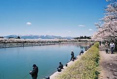 Gotemba (kiku-chiyo) Tags: olympus om1 zuiko 50mm fujifilm iso100 analog film japan 35mm